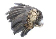 De Vleugel van de vogel Stock Afbeeldingen