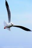 De vleugel van de zeemeeuw Royalty-vrije Stock Foto's