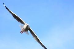 De vleugel van de zeemeeuw Stock Fotografie