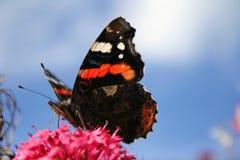 De vleugels van de vlinder Stock Foto