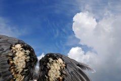 De vleugels van de vogel in hemel Stock Fotografie