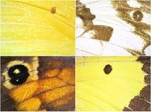De vleugeltextuur van de vlinder Stock Afbeelding