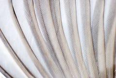 De vleugeltextuur van de vogel Stock Foto's