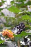 De vlieg van de de bloemenaard van het vlinderinsect stock foto