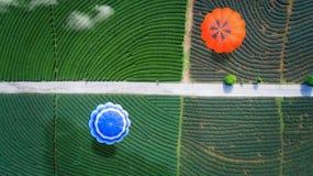 De vlieg van de hete luchtballon over groen theelandbouwbedrijf royalty-vrije stock afbeelding