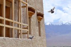 De vlieg van de vliegvogel Stock Foto's