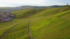 De vlieg van de wijngaardheuvel van hierboven door hommel Zonsondergangantenne van groen platteland wordt geschoten dat Langzame  stock videobeelden