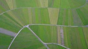 De vlieg van de wijngaardheuvel van hierboven door hommel Zonsondergangantenne van groen platteland wordt geschoten dat Langzame  stock footage