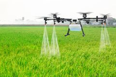 De vlieg van de landbouwhommel aan bespoten meststof op de padievelden Stock Fotografie