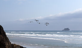 De Vlieg van pelikanen over de Oever Royalty-vrije Stock Foto's