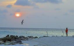 De VLIEG van visserswatches bird LANGS als ZONreeksen in Aruba royalty-vrije stock afbeelding