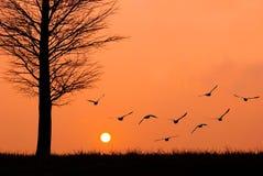 De vlieg van vogels aan de zon. stock fotografie