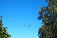De vlieg van vogels in de blauwe hemel royalty-vrije stock fotografie