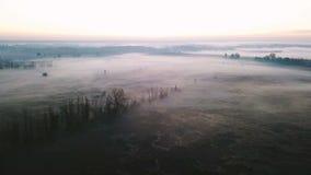 De vliegen van de camerahommel over een gebied met mist Installaties in de bomen van de rijpherfst Fascinerende aard videolengte stock video