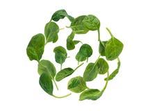 De vliegende spinazie verlaat sferische vormhoop Royalty-vrije Stock Afbeelding