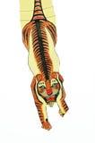 De vlieger van de tijger Royalty-vrije Stock Fotografie