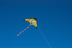De vlieger van de tijger Stock Fotografie