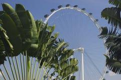 De vlieger van Singapore Stock Fotografie