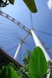 De Vlieger van Singapore van onderaan stock foto