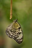 De vliegervlinder die van het document voor de nacht rust royalty-vrije stock foto