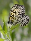 De vliegervlinder van het document op blad Stock Fotografie
