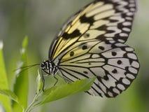 De vliegervlinder van het document op blad Royalty-vrije Stock Afbeeldingen