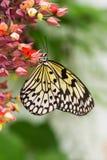 De vliegervlinder van het document - verticaal beeld stock afbeelding