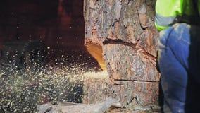 De vliegzaagsel van de boom zagend kettingzaag stock footage