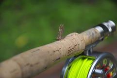 De vliegzitting van het meer op een staaf Stock Fotografie