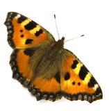 De vlinder. Stock Afbeelding