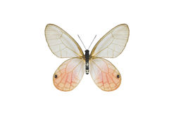 De vlinder Royalty-vrije Stock Foto