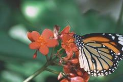 De vlinder stock foto