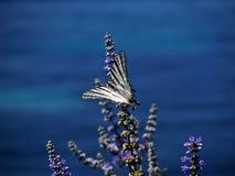 De vlinder Royalty-vrije Stock Afbeeldingen