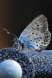 De vlinder berijdt op de fiets Royalty-vrije Stock Foto's