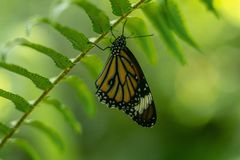 De vlinder die het is vleugels het rusten openen stock fotografie