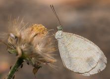 De vlinder hangt op bloem Royalty-vrije Stock Afbeelding