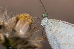 De vlinder hangt op bloem Stock Foto's