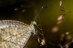De vlinder hangt op bloem Stock Fotografie