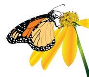 De vlinder-kant van de monarch mening Stock Foto's