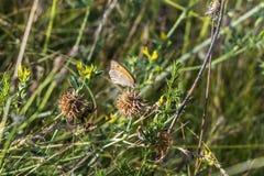 De vlinder merkt niet de gevaarlijke buur van de spin op royalty-vrije stock afbeeldingen