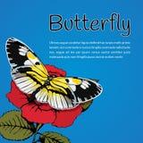 De vlinder met gele zwart-witte vleugels op de bloem van een rood nam op een blauwe hemelachtergrond en een ruimte toe voor tekst Stock Foto's