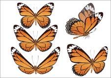 De vlinder met kleurenvleugels. Vector. Stock Foto