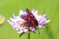 De vlinder op de bloem Stock Fotografie