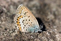 De vlinder op een steen Royalty-vrije Stock Foto