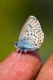 De vlinder op een vinger Royalty-vrije Stock Foto