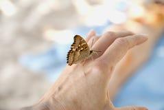 De vlinder op vrouwenwapen Stock Afbeeldingen