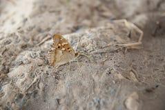 De vlinder op zandmacro Royalty-vrije Stock Afbeeldingen