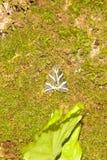 De vlinder Petaloudes van Rhodosgriekenland Royalty-vrije Stock Fotografie