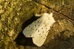 De vlinder in de schaduw op een stomp at in de de lenteochtend Royalty-vrije Stock Foto