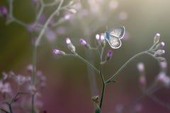 De vlinder is schoonheid royalty-vrije stock foto's